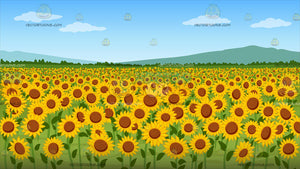A Field Of Sunflowers Background