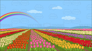 A Field Of Tulips Background