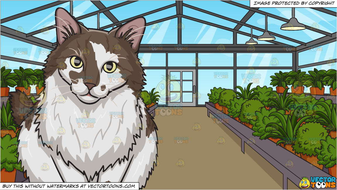 A Fluffy Brown And White Cat and Inside A Greenhouse Background