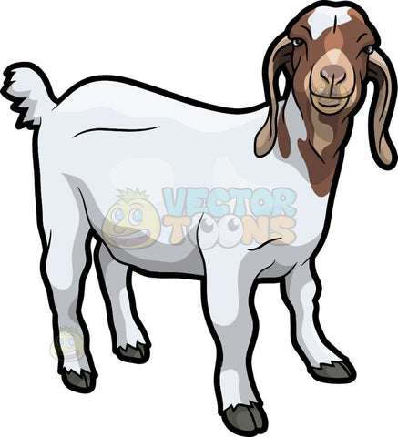 A friendly looking goat