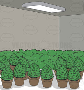 A Grow Room Full Of Potted Plants
