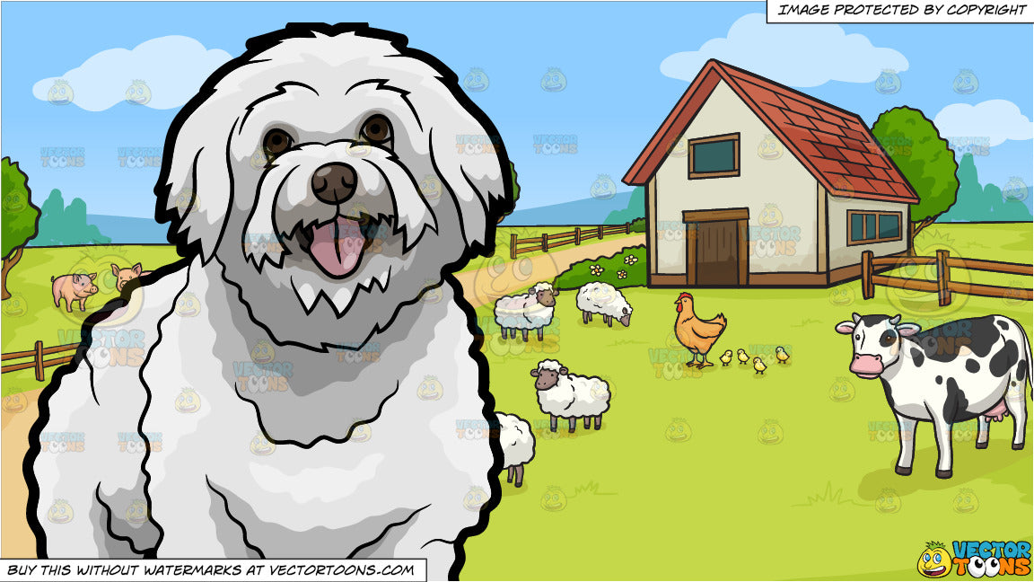 A Lovely Bichon Frise Dog and A Farm Background