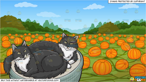 A pair of black and white cats in a cat bed and A Pumpkin Patch Background