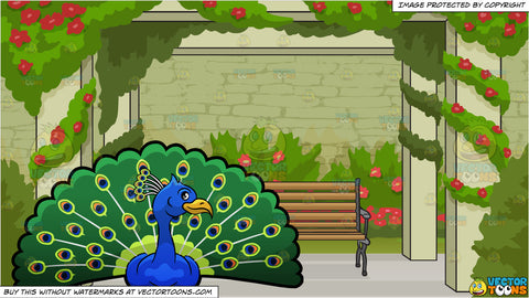 A Peacock Showing Off Its Colorful Feathers and Bench In A Rose Garden Background
