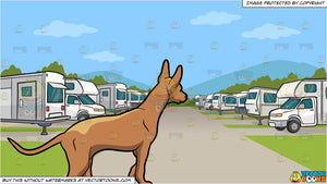 A Pharaoh Hound Dog Walking Slowly and An Rv Park Background