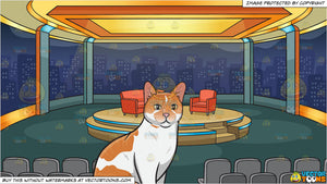 A Pretty Domestic Cat and A Talk Show Studio Background