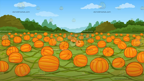 A Pumpkin Patch Background