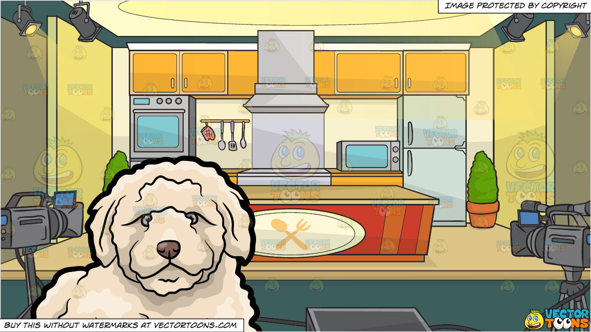 A Quiet And Resting Golden Doodle Dog and A Cooking Show Studio Background