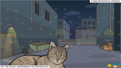 A Resting Striped Cat and A Dark Alley At Night Background