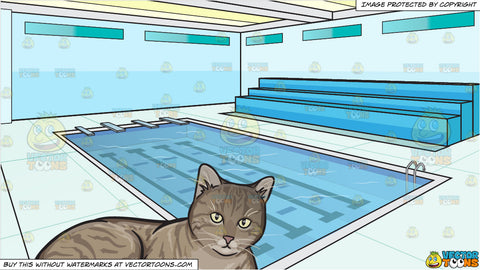 A Resting Striped Cat and Indoor Olympic Size Swimming Pool Background