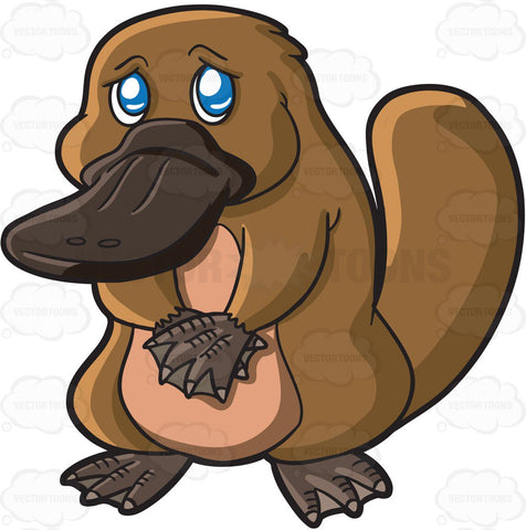 A Sad Looking Platypus