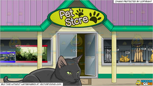 A Serious Black Cat Sitting Still and Outside A Town Pet Store