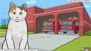 A Serious Looking Cat and A Fire Station Background