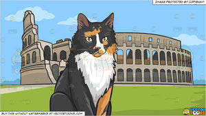 A serious looking fluffy cat and The Colosseum Background