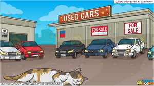 A Sleeping Calico Cat and Used Car Lot Background