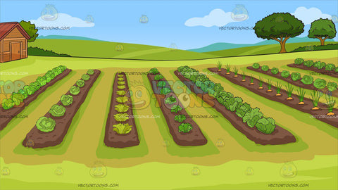 A Vegetable Garden Background