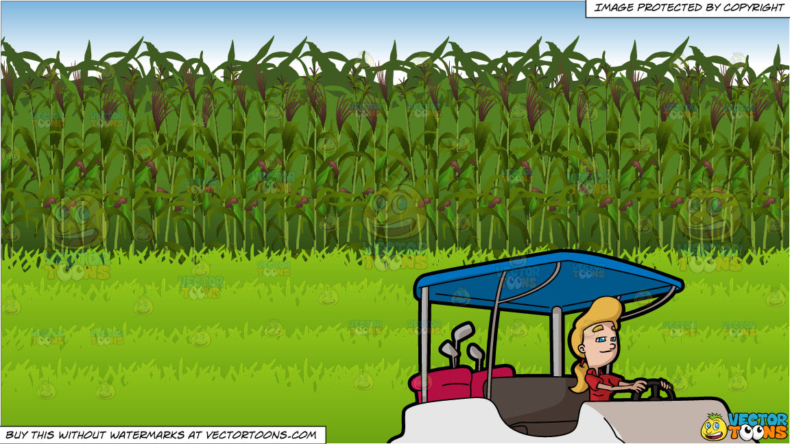 A Woman Driving A Golf Cart To Go To The Fairways and Corn Field Background