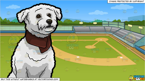 An Adorable Bichon Frise Dog and A Baseball Field Background