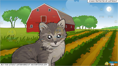 An Adorable Little Kitten and Farm Field And Barn Background