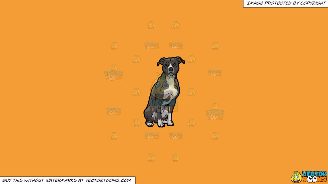 Clipart: An Adult Pit Bull Dog on a Solid Deep Saffron Gold F49D37  Background