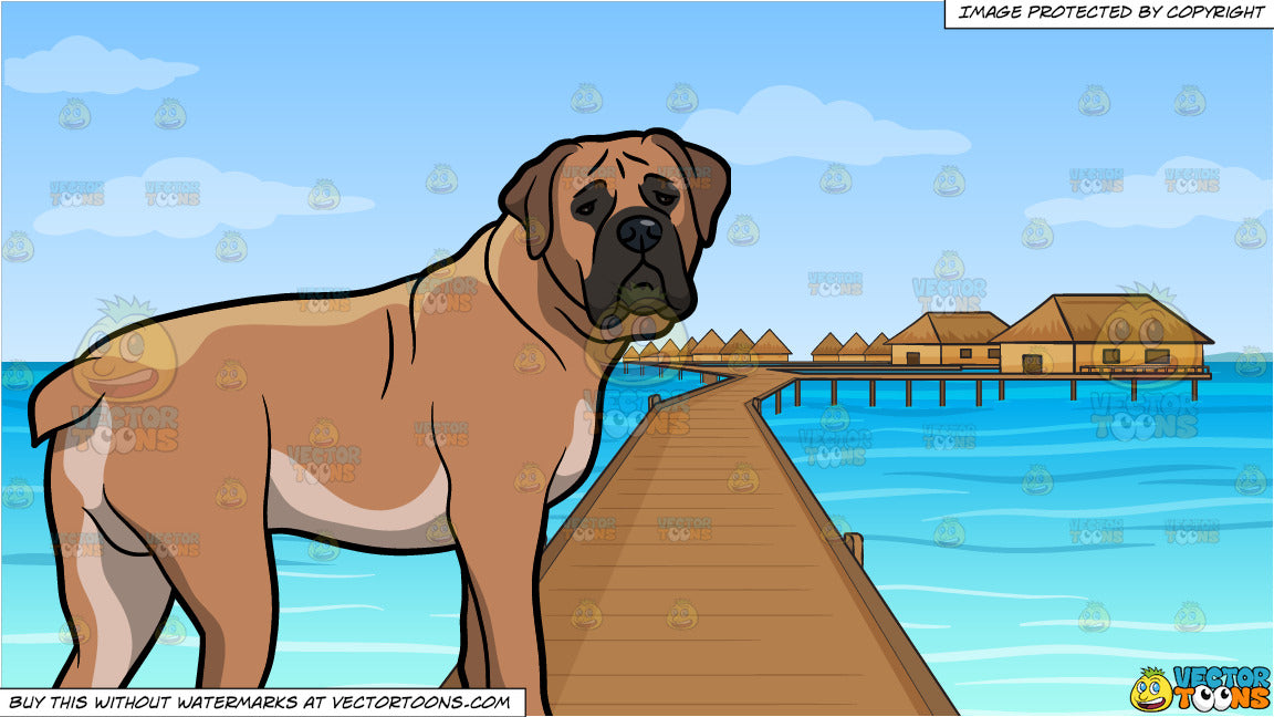 An Alerted Boerboel Dog and Resort In The South Pacific Background