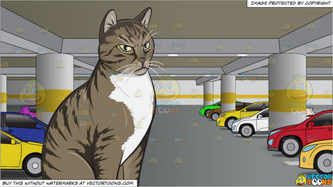 An Angry Domestic Cat and An Underground Parking Lot Filled With Cars Background
