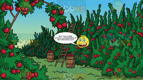 An Apple Orchard Background. An orchard filled with apple trees ready to be picked, and a ladder leaning up against one of the trees and two barrels filled with apples next to it