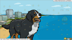 An Intrigued Bernese Mountain Dog and A Beach Lined With Hotels Background