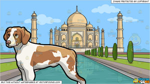 An Observant Brittany Spaniel Pet Dog and Taj Mahal Background