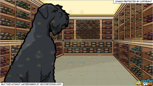 An Observant Giant Schnauzer Dog and A Wine Cellar Background