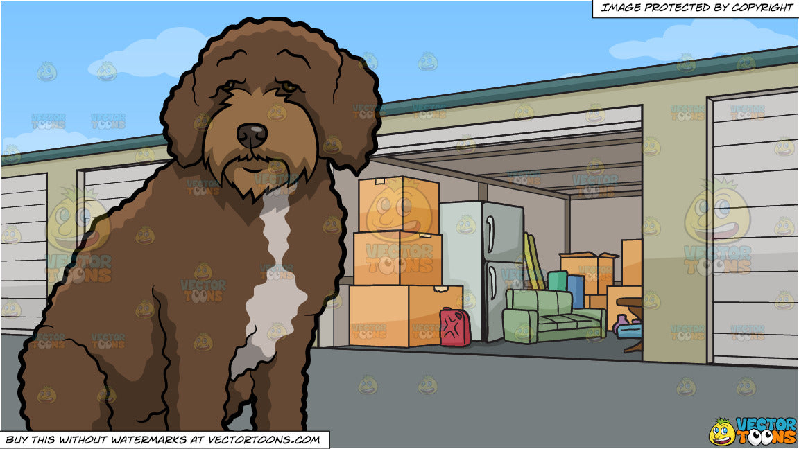An Observant Spanish Water Dog and Self Storage Units Background