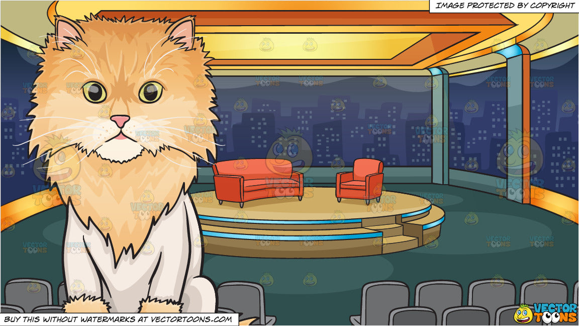 An Unconventionally Shaved Cat and A Talk Show Studio Background