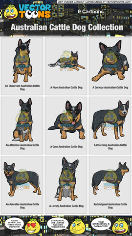 Australian Cattle Dog Collection