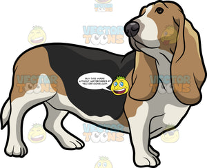 An Attentive Basset Hound Pet Dog