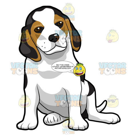 Young Beagle Puppy Sitting Down And Looking Straight Ahead