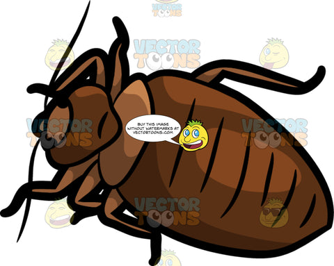 A Short Fat Bed Bug