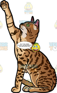 A Playful Bengal Cat. A pretty Bengal cat with a marbled coat and green eyes, sitting on its hind legs and reaching up with one front paw in a playful manner