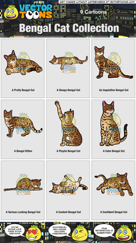 Bengal Cat Collection