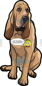 An Obedient Bloodhound Pet Dog