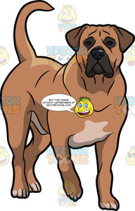 A Beautiful Boerboel Dog