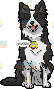 A Cute Border Collie Dog
