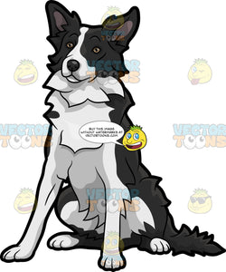 A Quiet Border Collie Dog