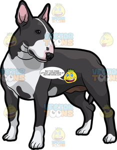 An Observant Bull Terrier