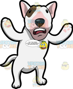 A Confused Bull Terrier
