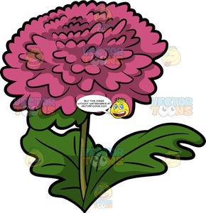A Pink Chrysanthemum Flower