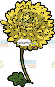 A Yellow Chrysanthemum Flower
