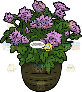 Chrysanthemum Flowers In A Pot