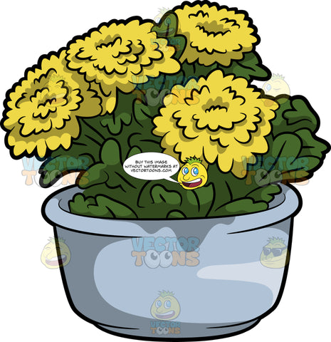 A Chrysanthemum Plant With Flowers