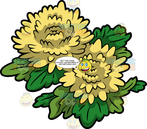 Two Chrysanthemum Flowers With Leaves