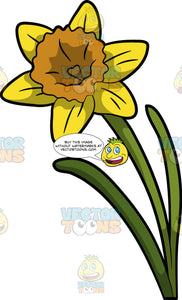 A Blossoming Daffodil Flower